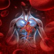 Human heart circulation cardiovascular system with...