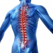 Human body backache and back pain with an upper to...