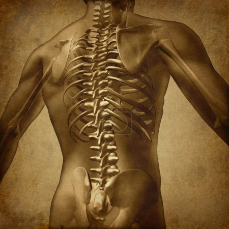 Photo for Human back medical document an old vintage grunge texture on parchment paper for backache and back pain with an upper torso body skeleton showing the spine and vertebral column as a medical health care concept for spinal surgery and therapy. - Royalty Free Image
