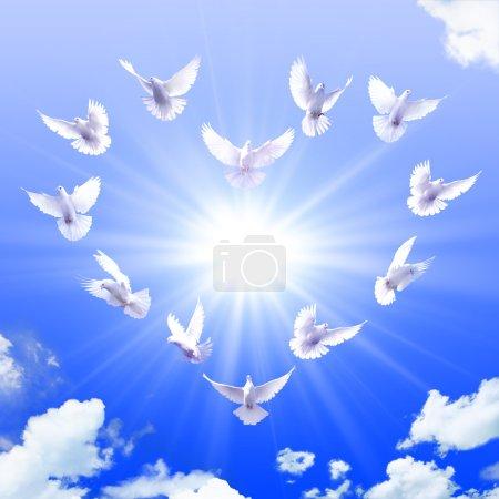 Foto de Un grupo de palomas blancas en forma de un corazón en el cielo - Imagen libre de derechos