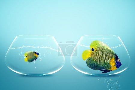 grands et petits poissons-anges