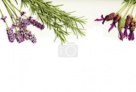 Herbs on a white background
