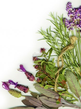 Photo for Background made from healing herbs - Royalty Free Image