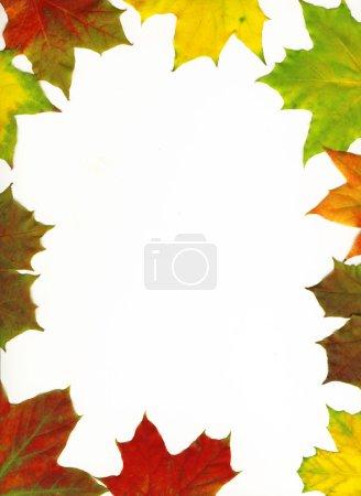 Photo pour Feuille d'érable d'automne cadre arrière-plan. Feuilles avec chemin de coupe - image libre de droit