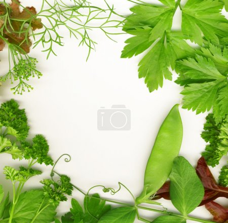 Photo for Border of fresh herbs, including dill, peas, basil, thyme, sage, parsley and oregano. - Royalty Free Image