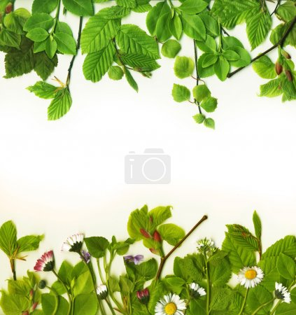 Photo for Foliage frame with summer leaves - Royalty Free Image