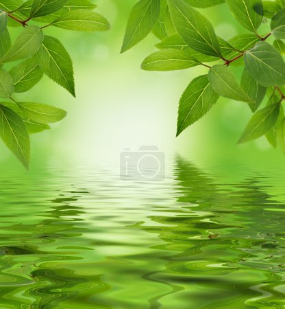 Photo for Green leaves design background water reflection and copy space - Royalty Free Image