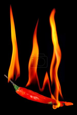 Photo for Red hot chili pepper on fire, isolated on a black background - Royalty Free Image