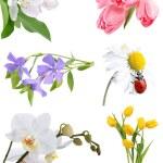 Постер, плакат: Flower collage