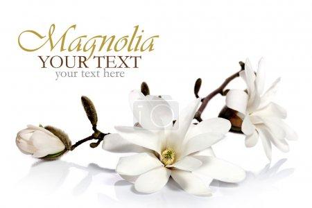 Magnolia flower border