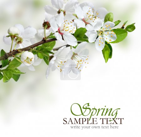 Photo for Beautiful spring flowers design border or background with copy space - Royalty Free Image