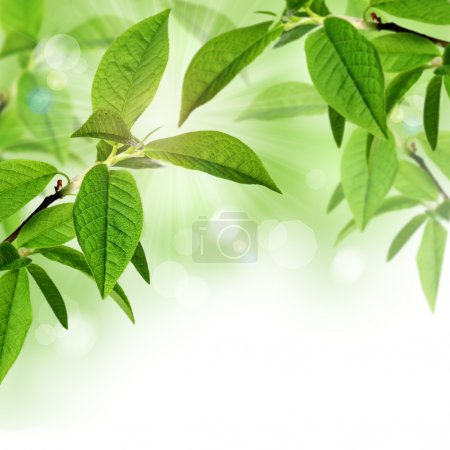 Summer or spring border background design with green leaves