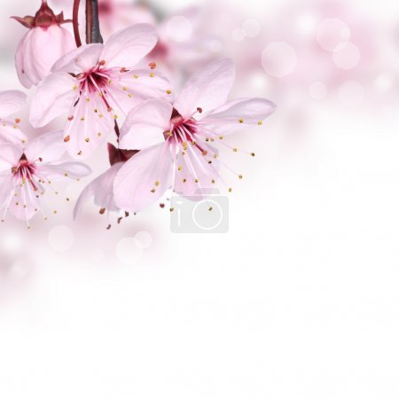 Photo for Pink spring flowers design border or background with copy space - Royalty Free Image
