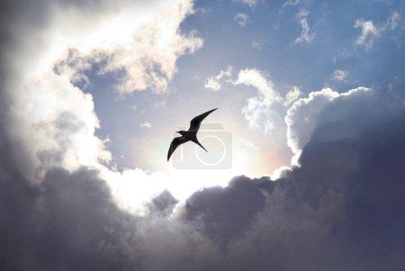 Photo pour Oiseau qui vole dans le ciel avec une formation de nuages dramatiques en arrière-plan. lumière qui brille creux qui donne une valeur symbolique de la vie et d'espoir. - image libre de droit