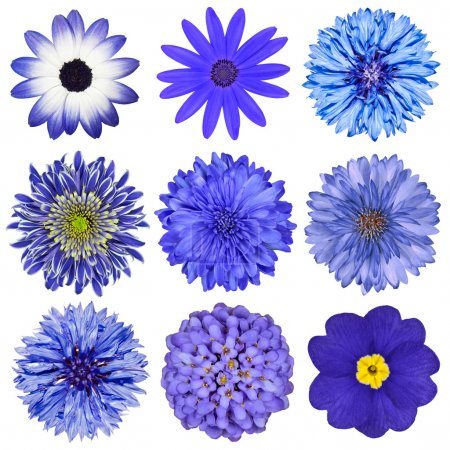 Various Blue Flowers Selection Isolated on White