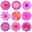 Selection of Pink White Flowers Isolated on White....