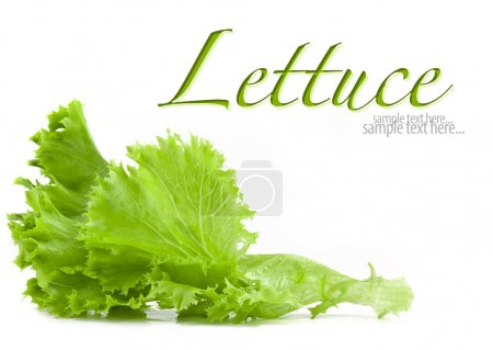Photo for Lettuce isolated on white background (with sample text) - Royalty Free Image