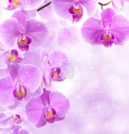 Photo pour Fleurs d'orchidée avec des gouttes d'eau scintillant sur les étincelles comme fond - image libre de droit