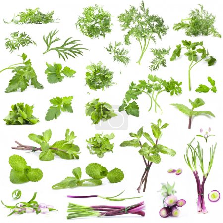 Photo for Big collection leaves parsley, mint, dill and onion isolated on white background, closeup, macro - Royalty Free Image