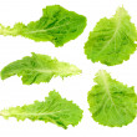 Set green salad leaf isolated...