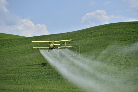 Photo for Agriculture: a low flying yellow biplane crop duster sprays a farm field in the Palouse region, Washington, U.S.A.. - Royalty Free Image