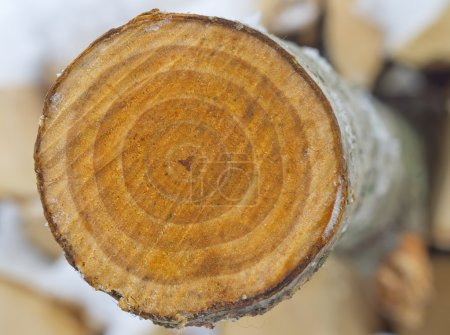 Photo pour Coupe scie à coupe transversale d'un tronc d'un peuplier faux-tremble. - image libre de droit