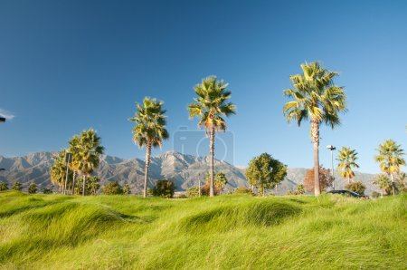 Photo for Mountains nature and palm trees under a Bright blue sky daylight - Royalty Free Image