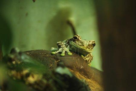 grün, Makro, klein, Tier, Mund, Augen - B8371215