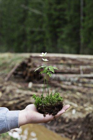 Photo pour Plante sur un flou coupé le fond de la forêt - image libre de droit