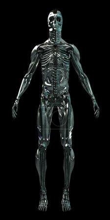 Cyborg Human Skeleton Android 3D