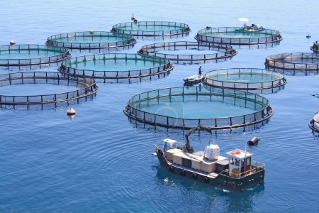 Fish farm on the sea