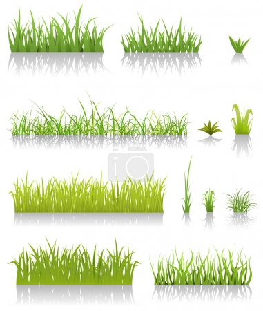 Illustration for Illustration of a set of various green blades of grassand other thin leaves for spring or summer time - Royalty Free Image