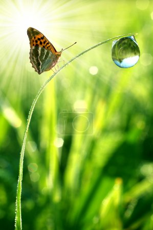 Photo for Fresh morning dew and butterfly - Royalty Free Image
