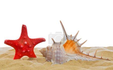 Shells with starfish