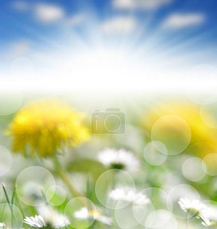 Naturaleza primavera bokeh