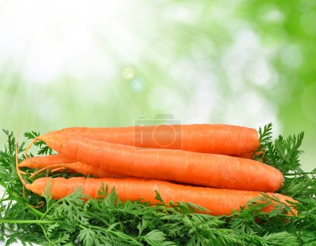 Photo for Carrots on green background - Royalty Free Image