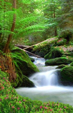 Foto de Cascada en el Parque Nacional sumava-República Checa - Imagen libre de derechos