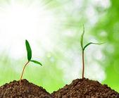 Pěstování zelených rostlin