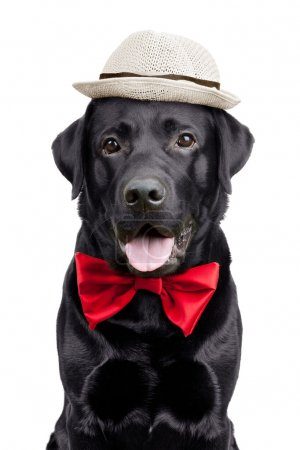 Black Labrador with a hat and tie