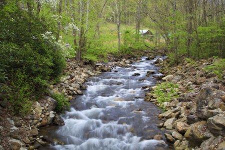 Photo pour Ruisseau de montagne au printemps avec des feuilles vertes luxuriantes, vieille grange en arrière-plan - image libre de droit
