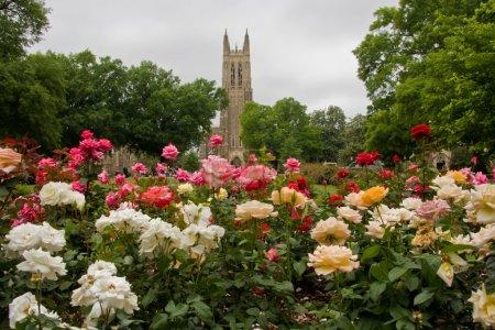 Photo pour Chapelle Duke avec la roseraie au premier plan - image libre de droit
