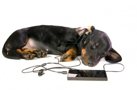 Dog with a mp3 player