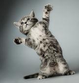 """Постер, картина, фотообои """"котенок"""""""