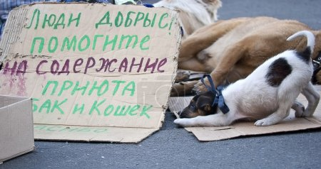Good help shelters for dogs and cats