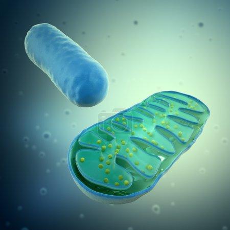 Foto de Representación 3D de un mitochondrium - ilustración de Microbiología - Imagen libre de derechos