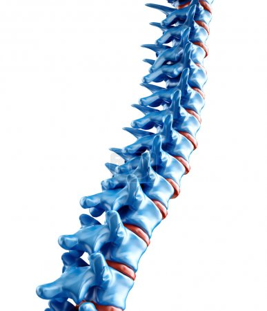 Computer generated medical illustration of a human spine
