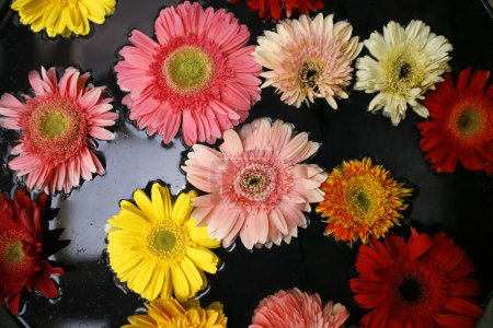 Colourful flowers floating in water