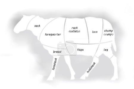 Lamb meat diagram