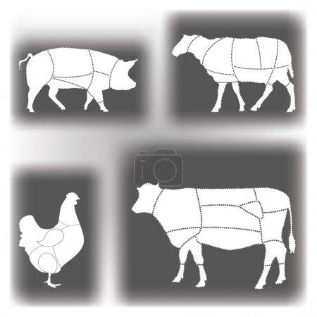 Meat Diagrams
