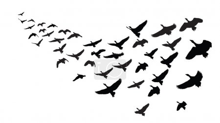 Geese in formation flight, black silhouette over w...